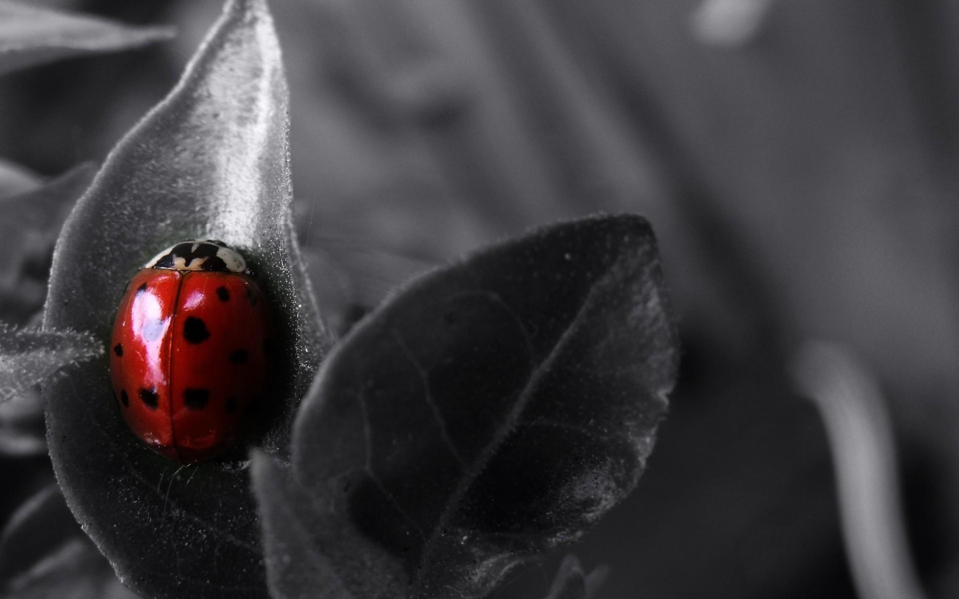 Hintergrundbilder Weiß Schwarz Tiere Einfarbig Natur Rot
