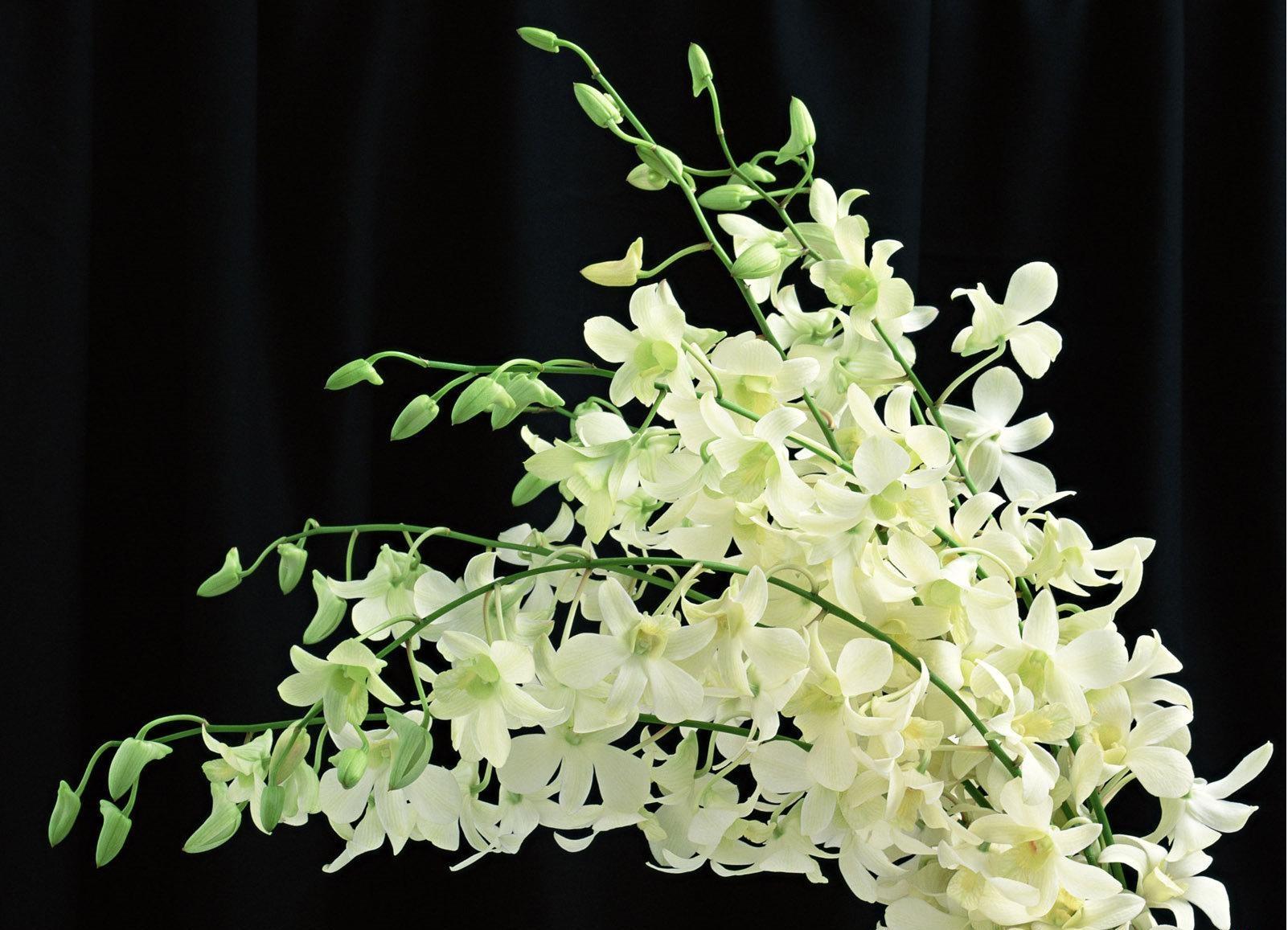 Papel De Parede Branco Fundo Preto Flores Ramo Verde