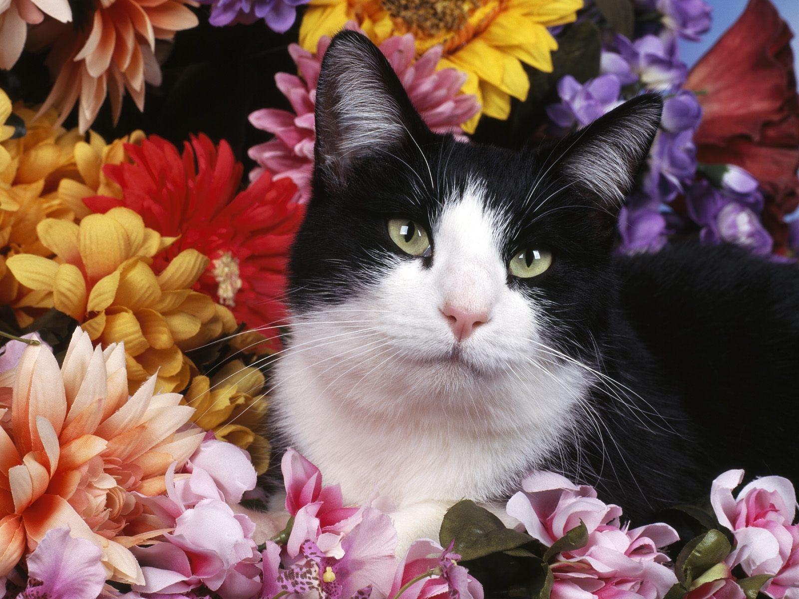 фото цветов с котиками может быть