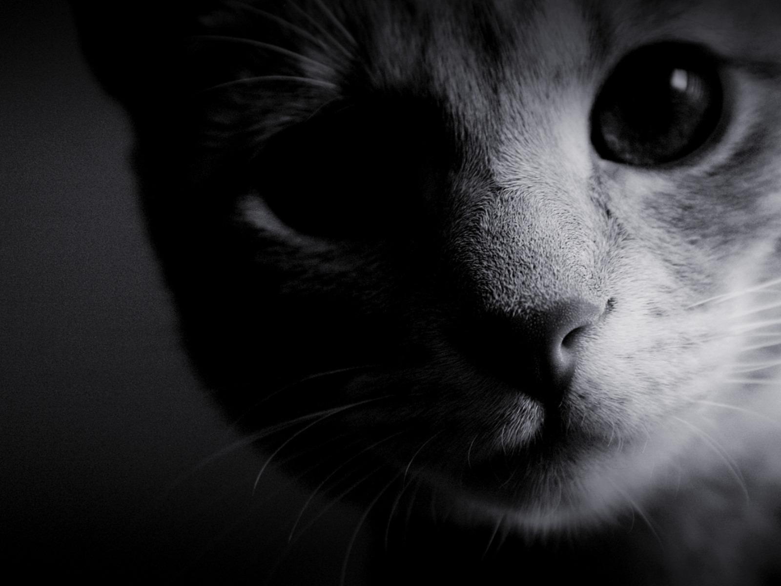 передает черно белые картинки на аву для ок чистом