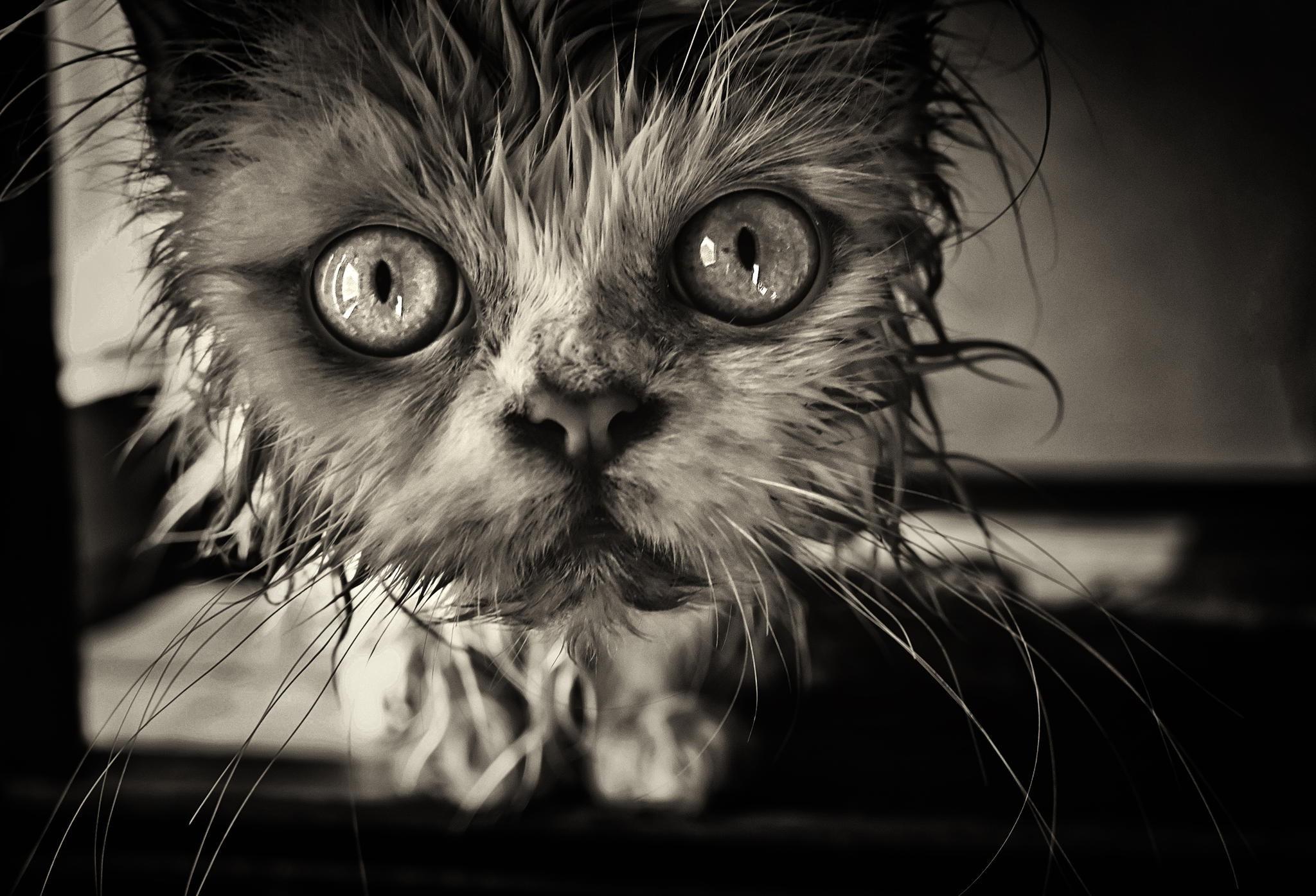 Картинки кота страшного