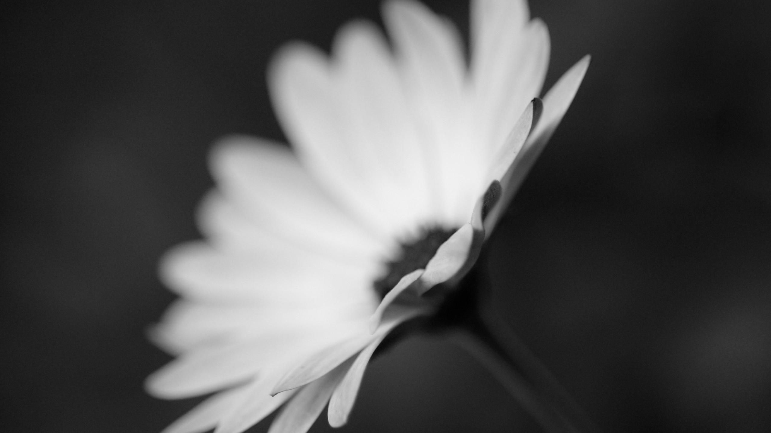 цветы на столе картинки черно-белые мире, где живет