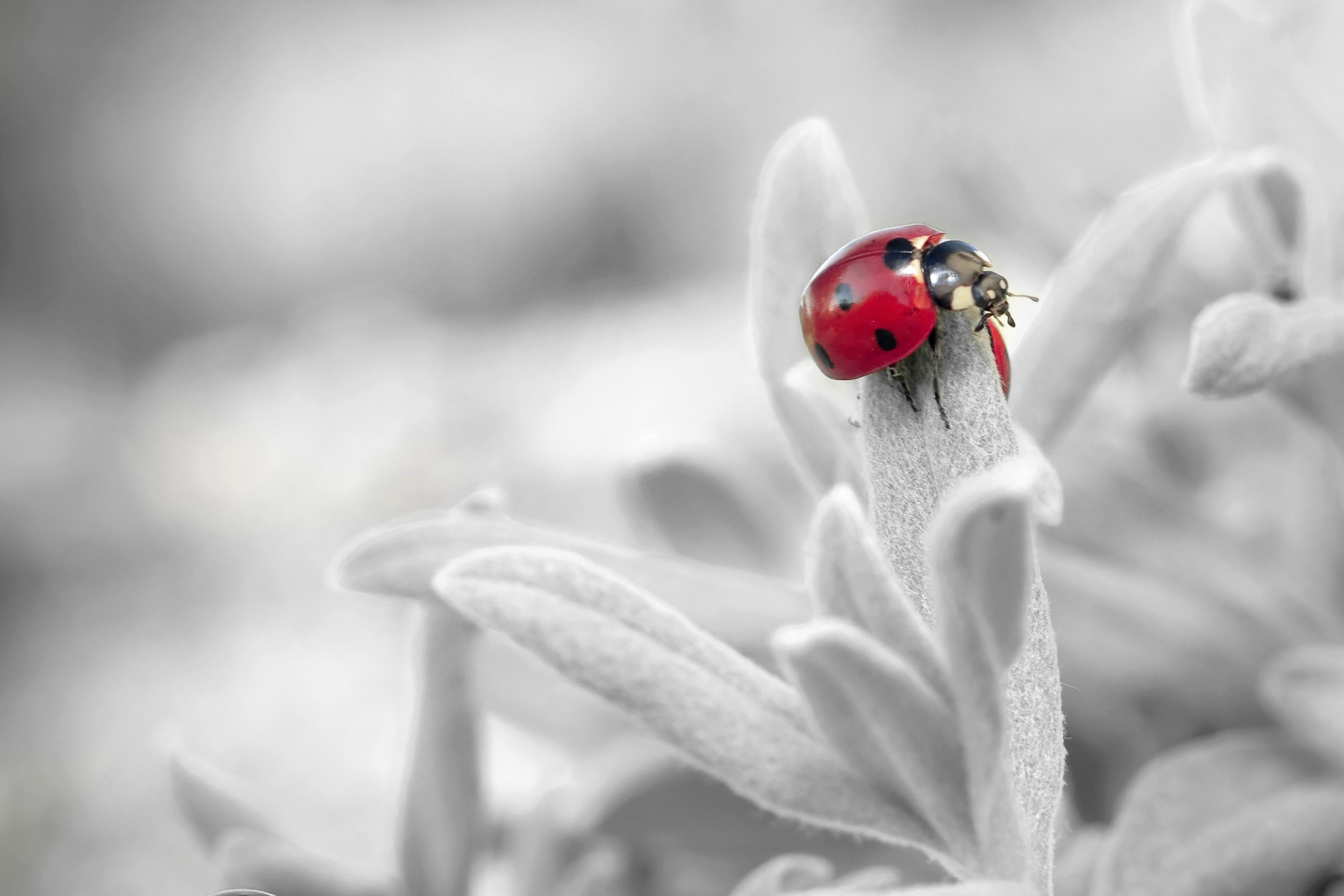 Hintergrundbilder Weiß Schwarz Einfarbig Natur Rot Fotografie