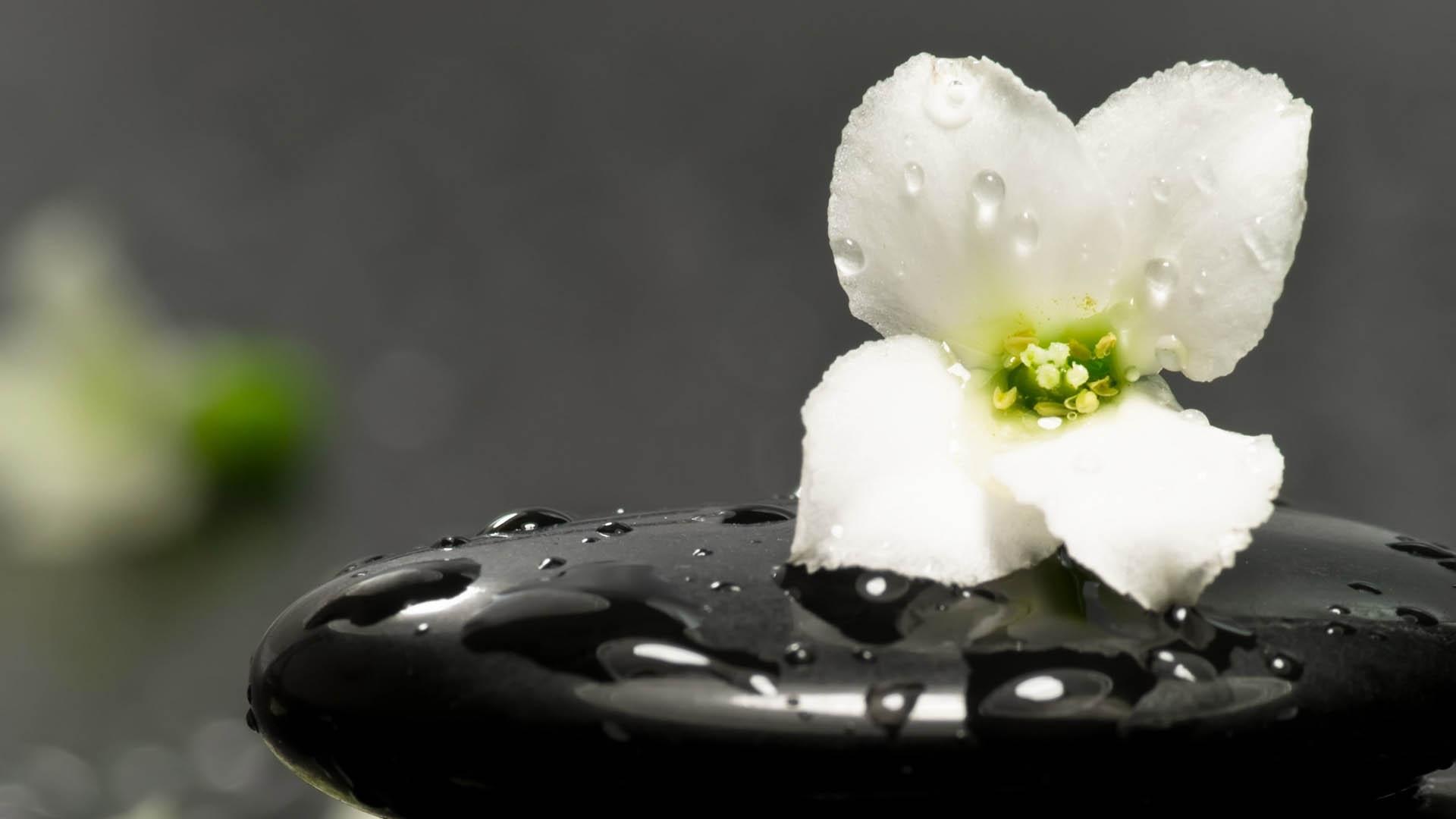 Фото цветов в хорошем качестве черно белые
