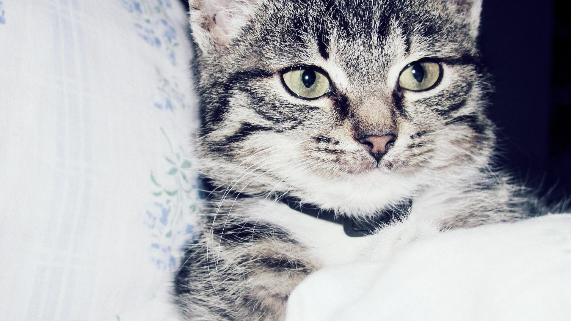 White Cat Animals Whiskers Kitten Mammal 1920x1080 Px Vertebrate Close Up Like Small To