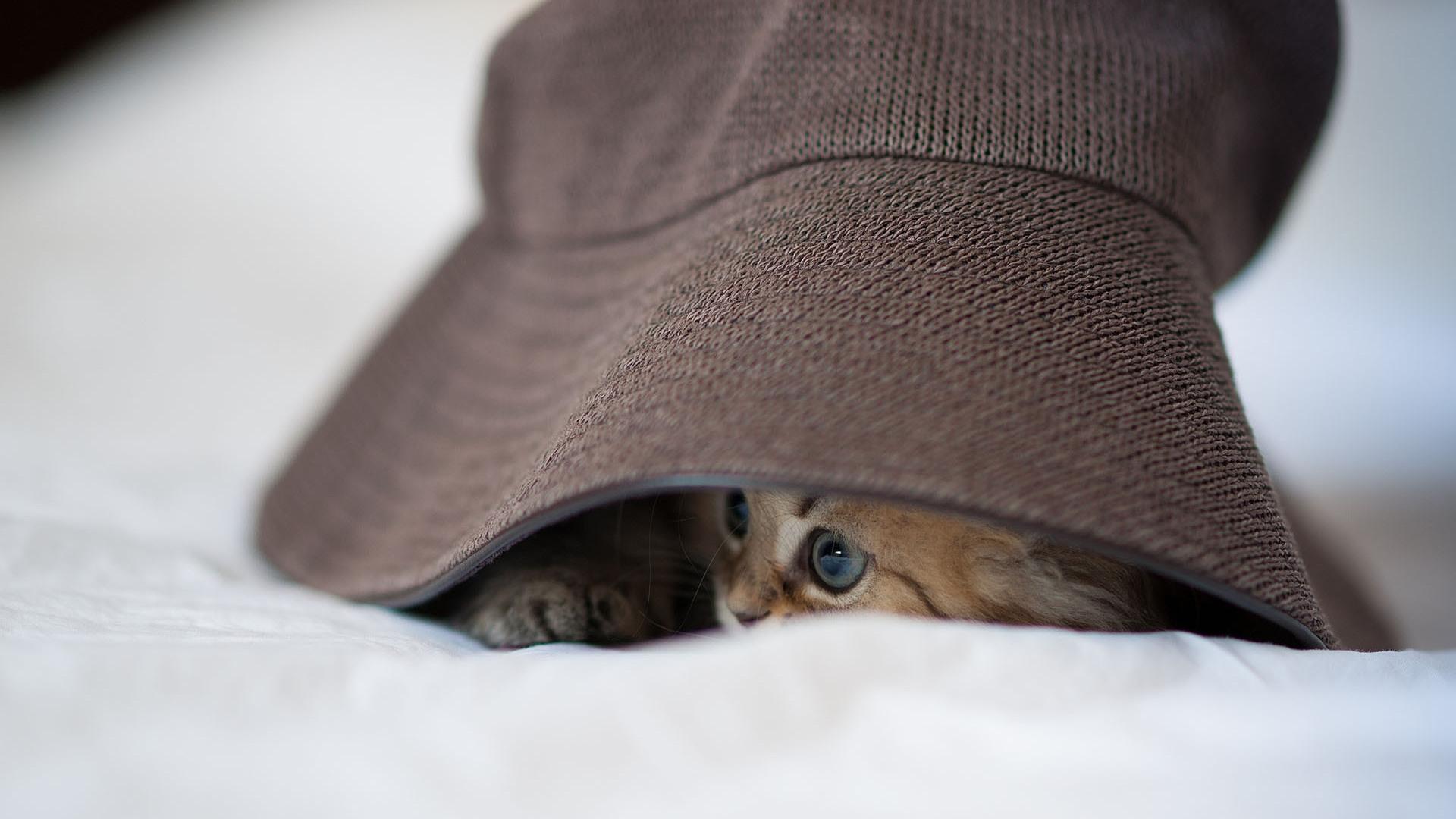 Wallpaper White Cat Eyes Glasses Hat Brown Nose Skin