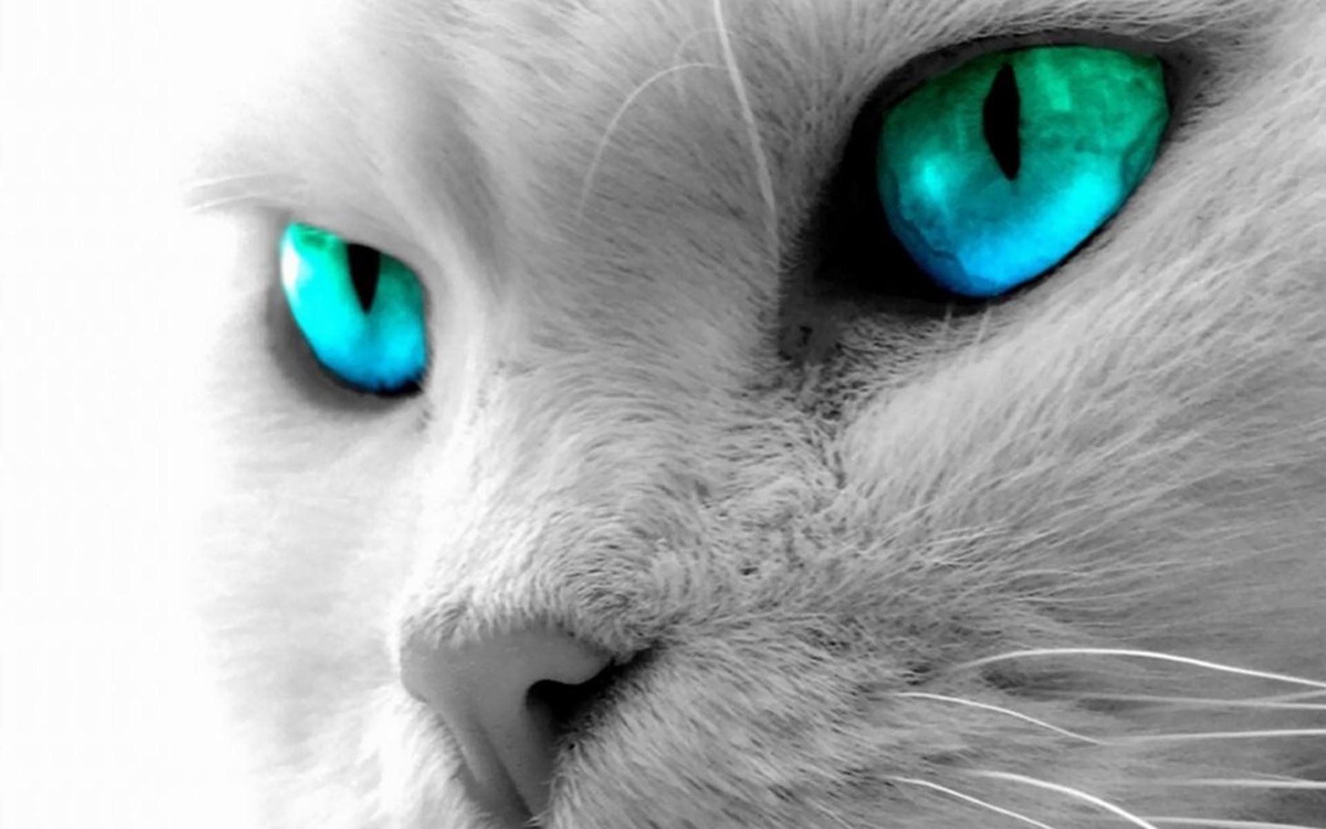 White Cat Monochrome Blue Eyes Nose Whiskers Eye Mammal Black And Human Body Organ Close