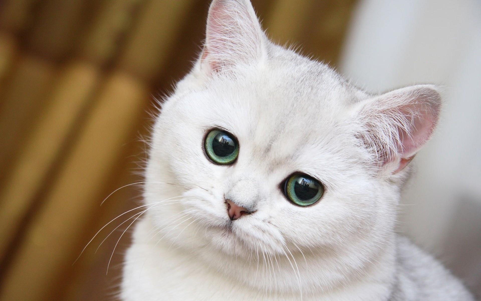 картинка любопытная киса око