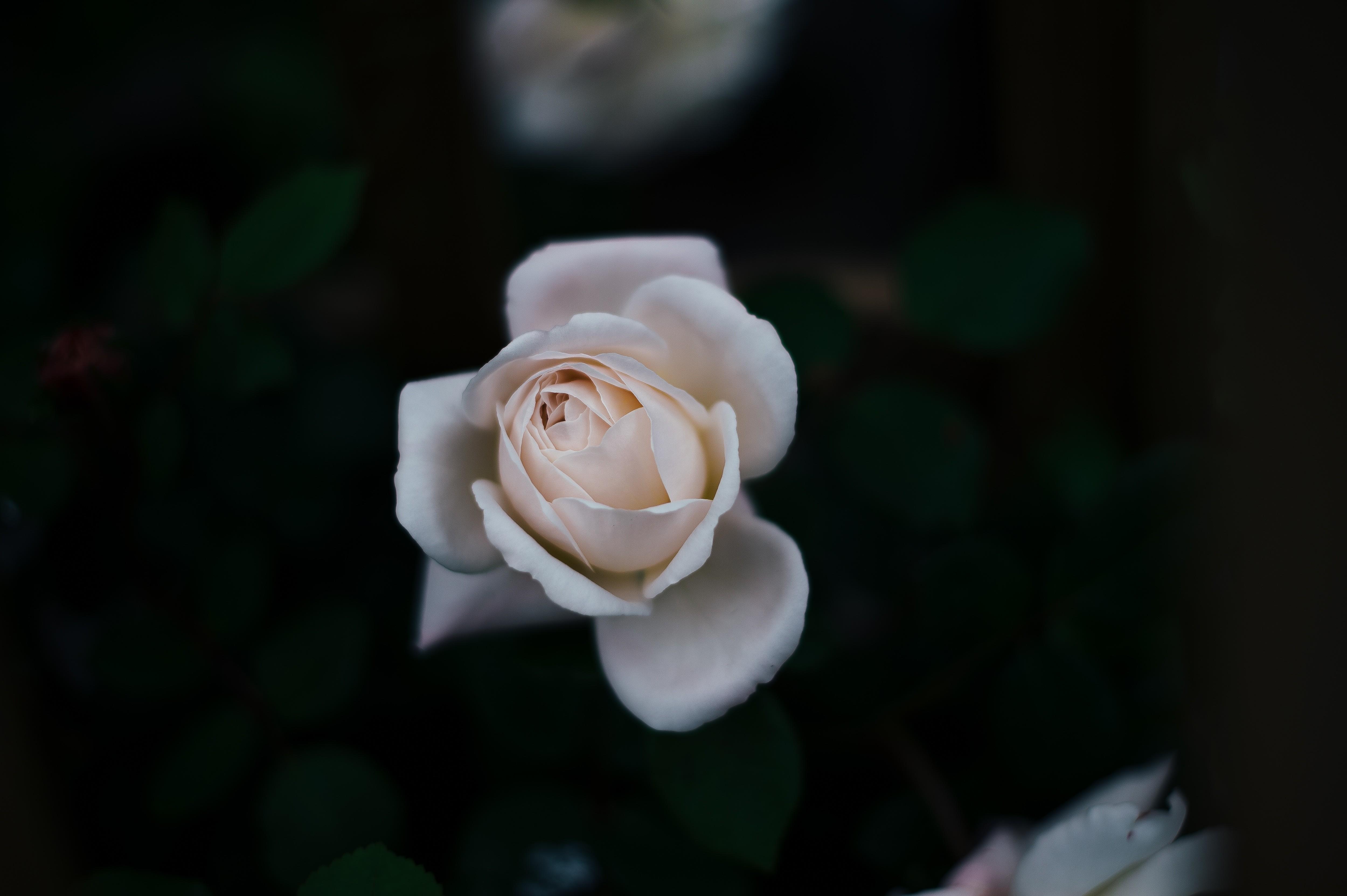 Wallpaper White Flowers Nature Blossom Flower Flora Petal