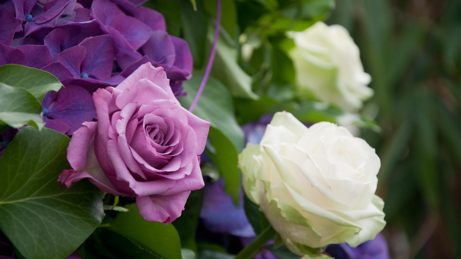 White Flowers Purple Blue Rose Blossom Hydrangea Soft Flower Plant Flora Roses Petal Land Flowering