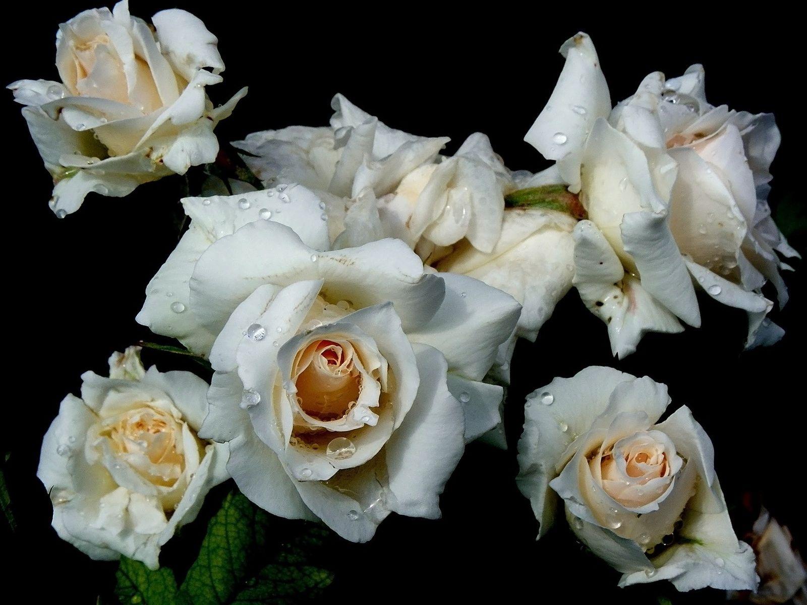 Три белых розы фото картинка душа умершего