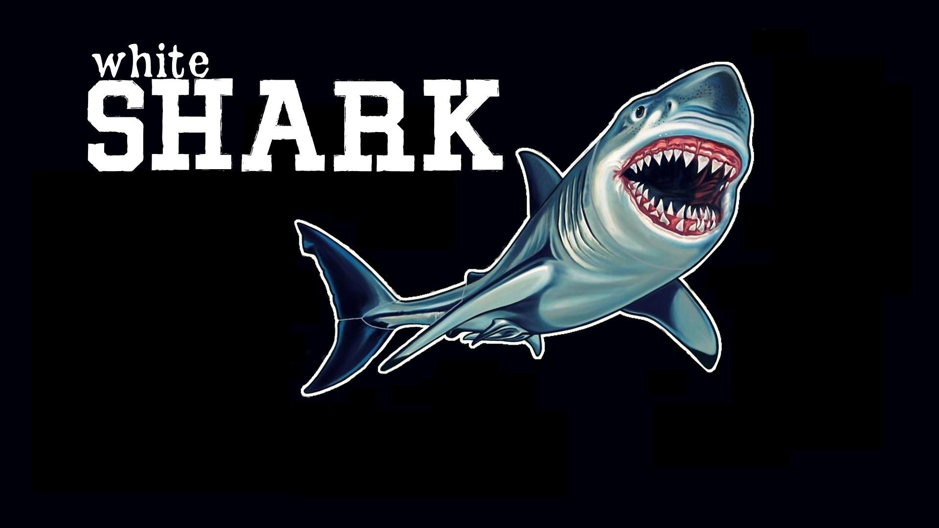 Fondos De Pantalla Blanco Ilustración Animales Tiburón Pescado
