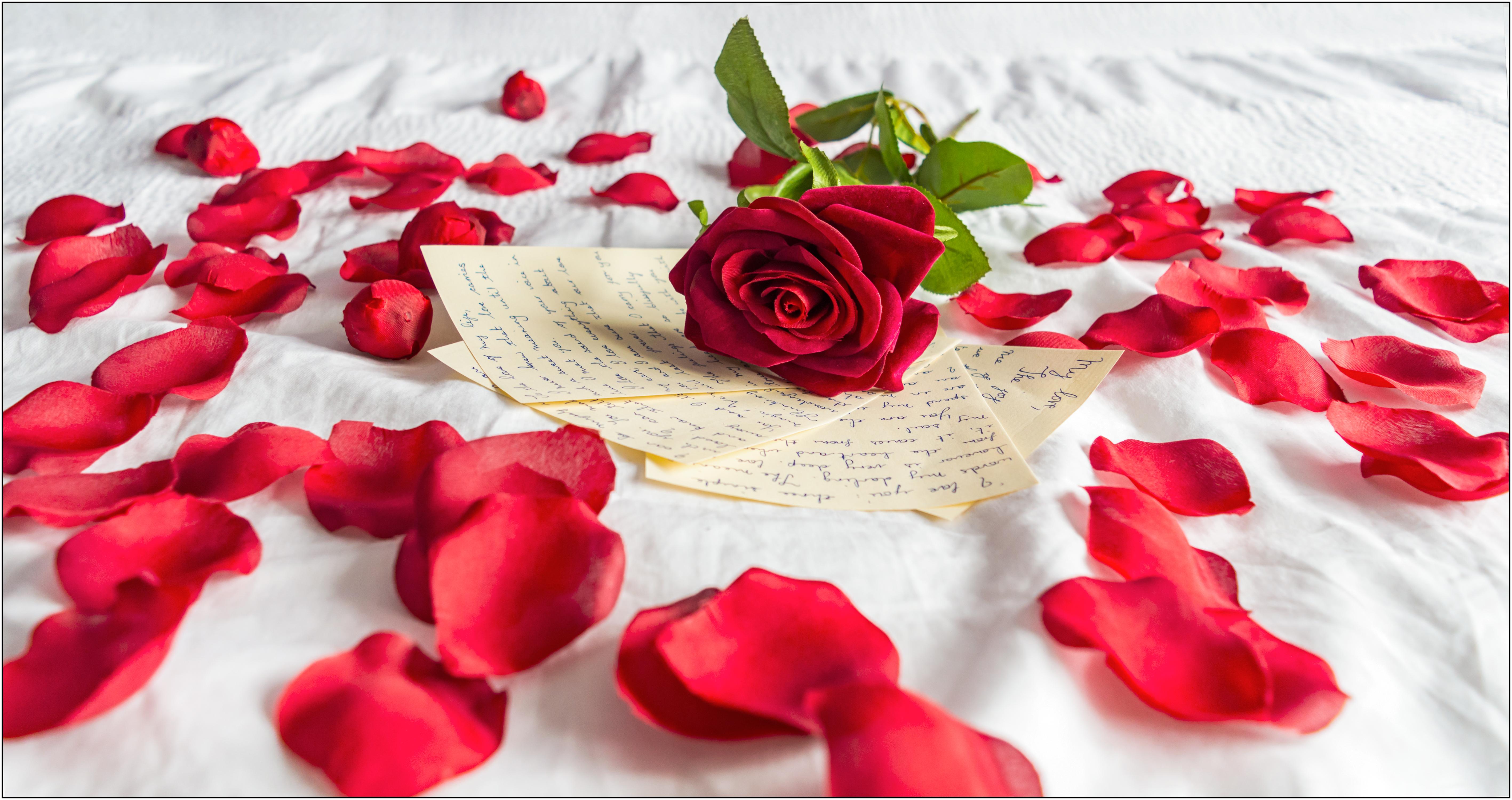 fond d 39 cran blanc amour c ur rose la saint valentin romance lettres d 39 amour p tale. Black Bedroom Furniture Sets. Home Design Ideas