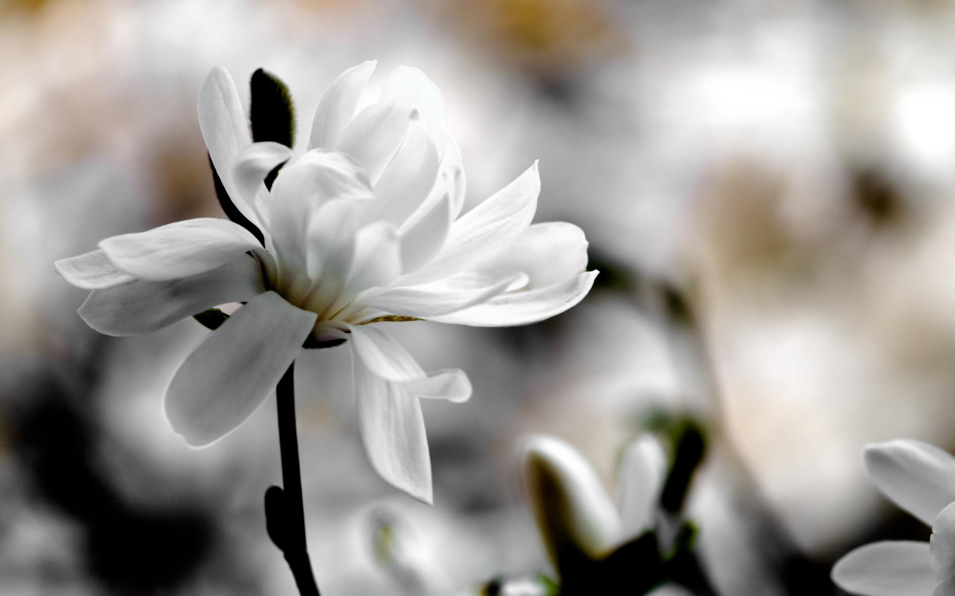 картинки с разрешением белые цветы юмор, что подтверждает
