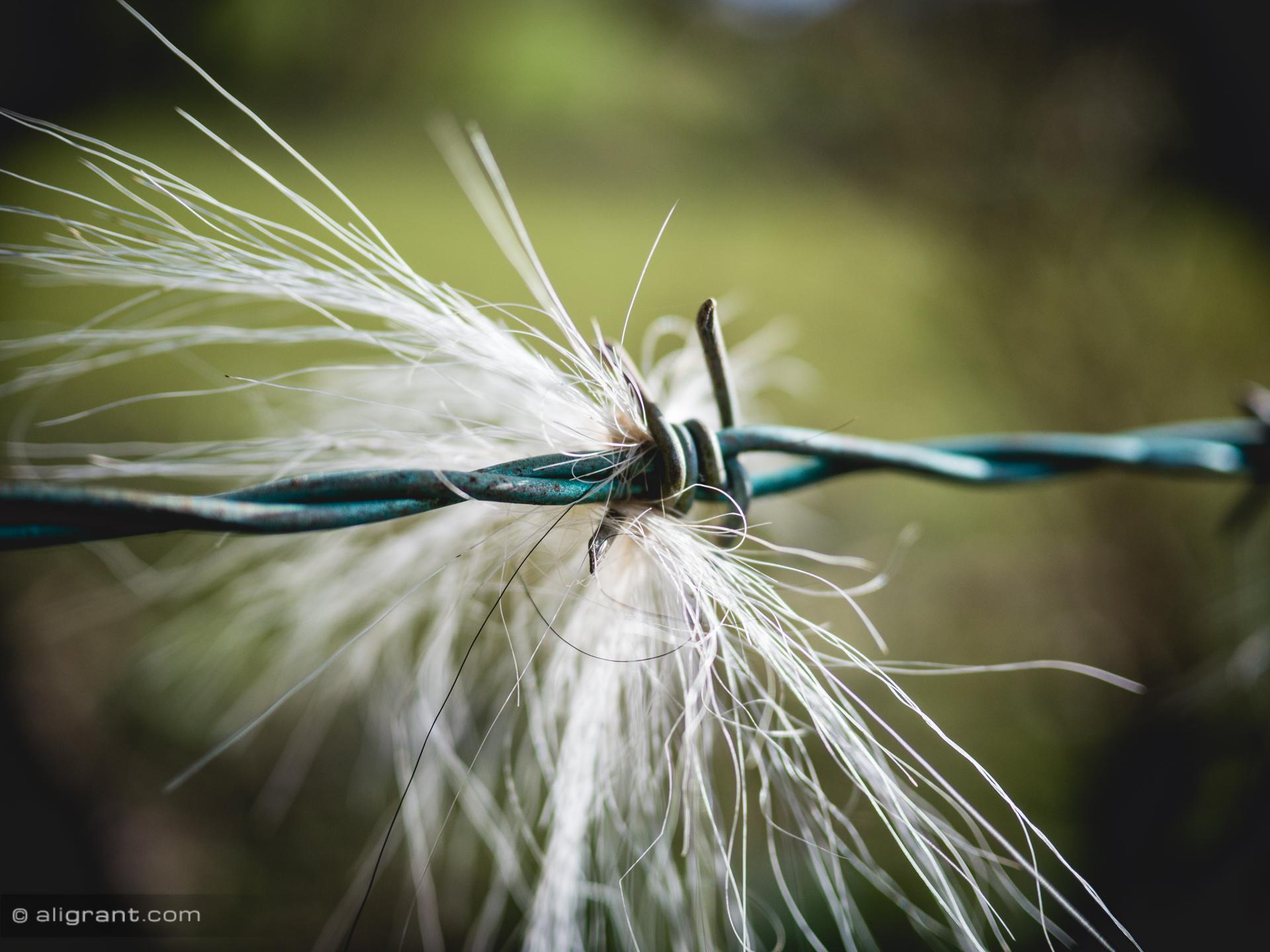 Hintergrundbilder : Weiß, Natur, Pferd, Gras, Nahansicht, Insekt ...