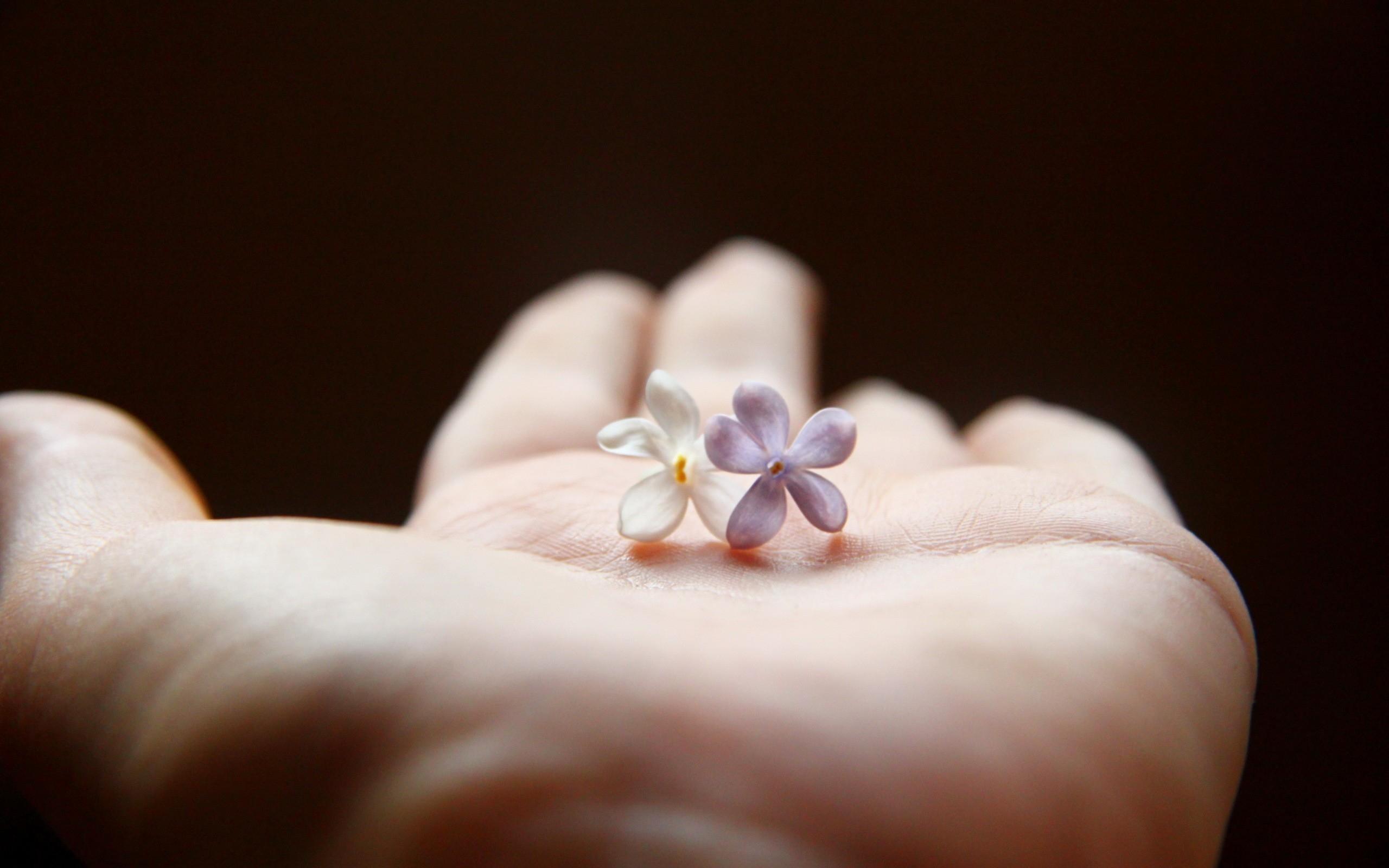 Картинки цветок в ладонях
