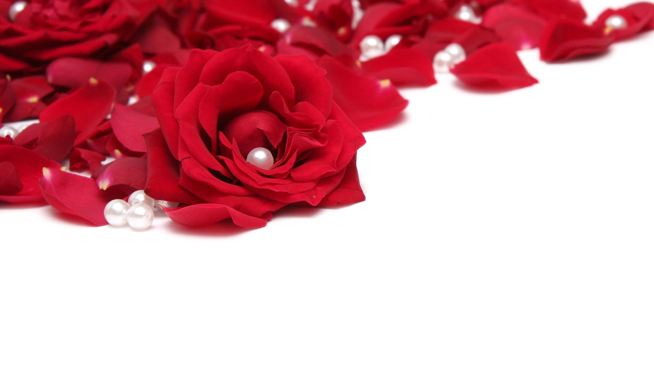 Wallpaper white red beads valentines day flower petal white red rose beads valentines day flower plant petal flowering plant floristry garden roses rose family mightylinksfo