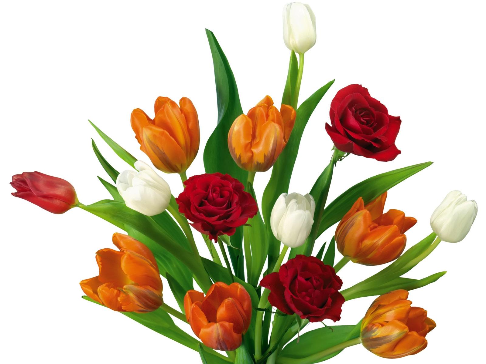 Papel De Parede Branco Vermelho Tulipas Laranja Flor