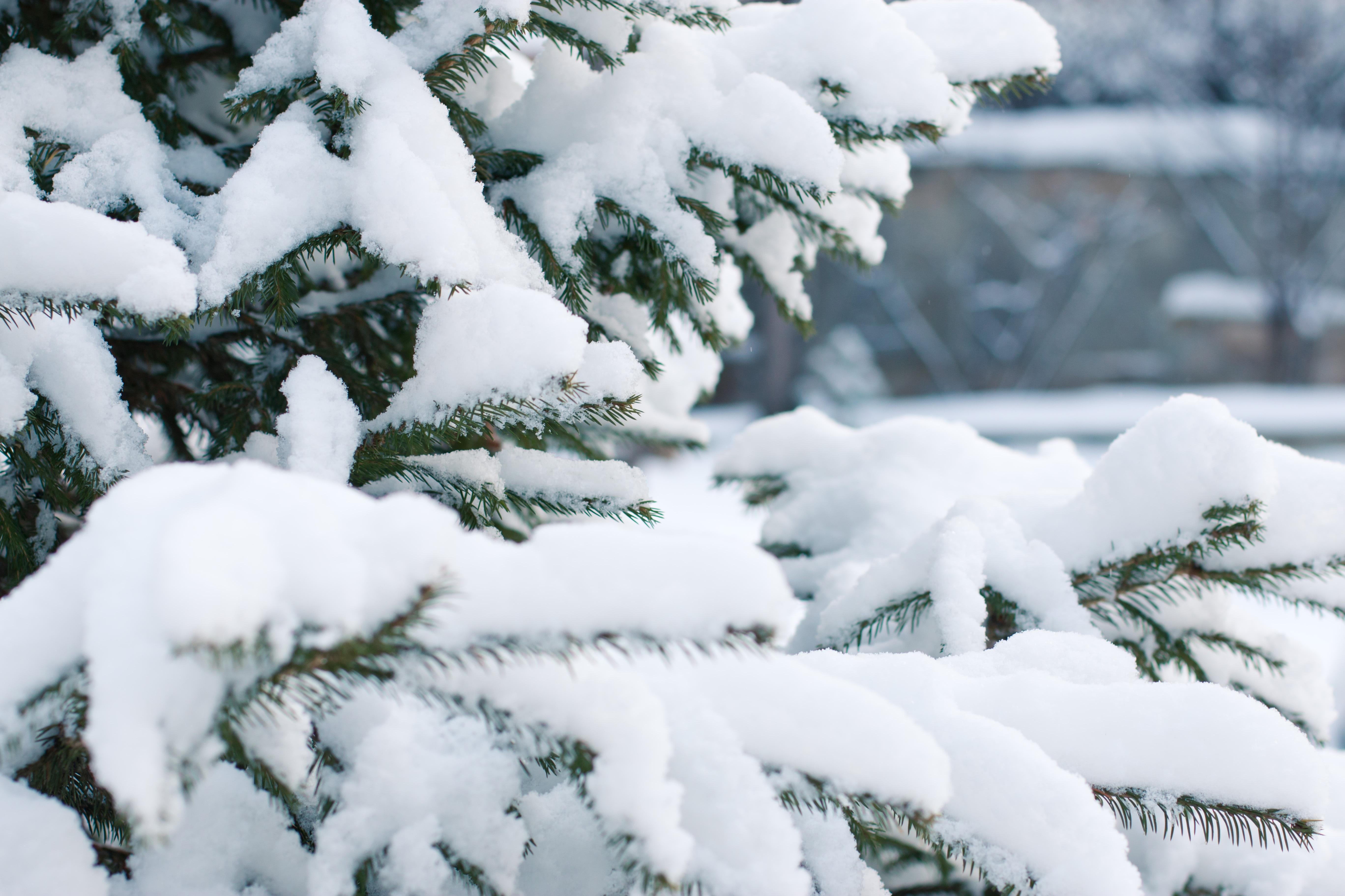 Картинки фото снега