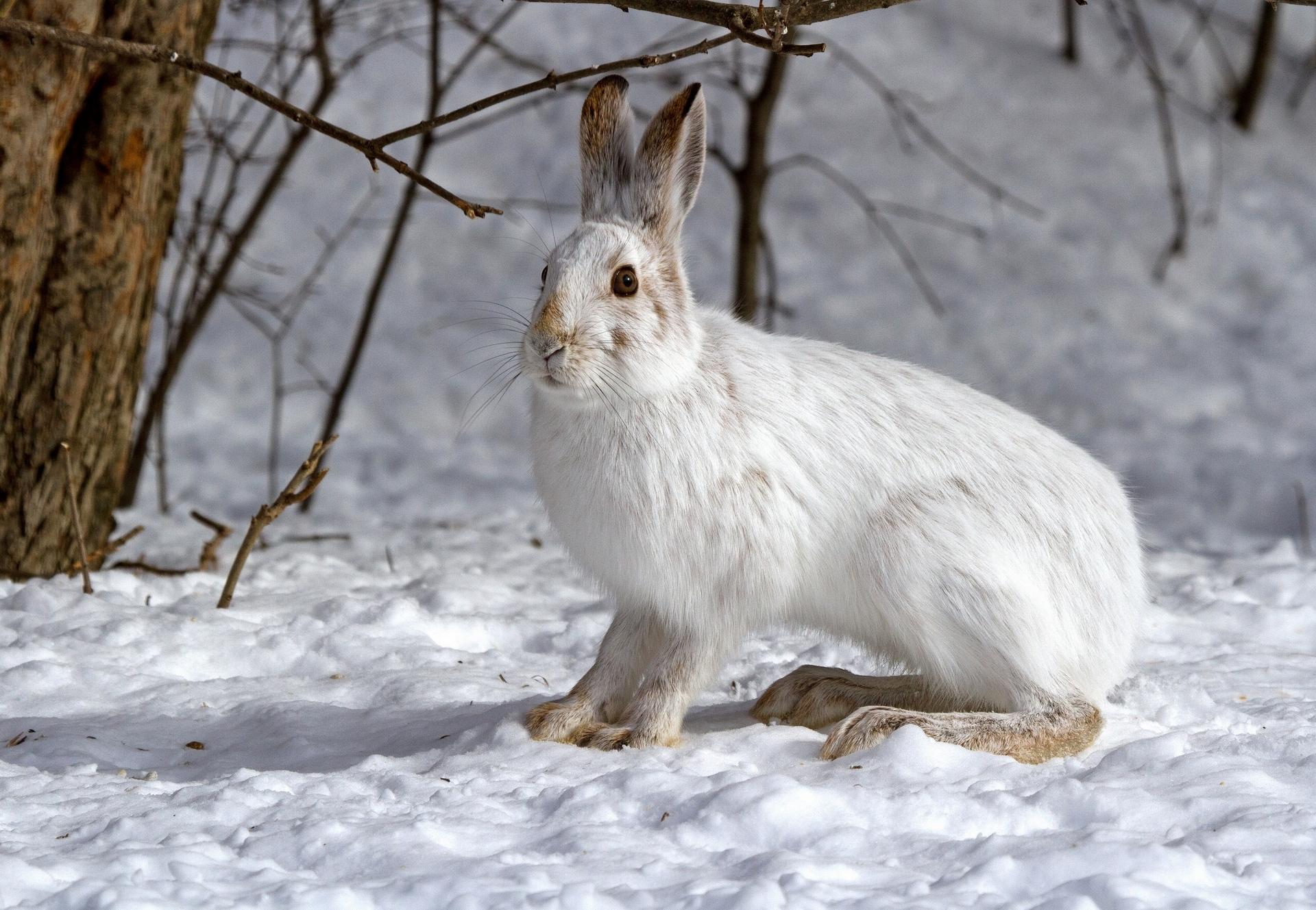 всего картинки животных в лесу зимой мои