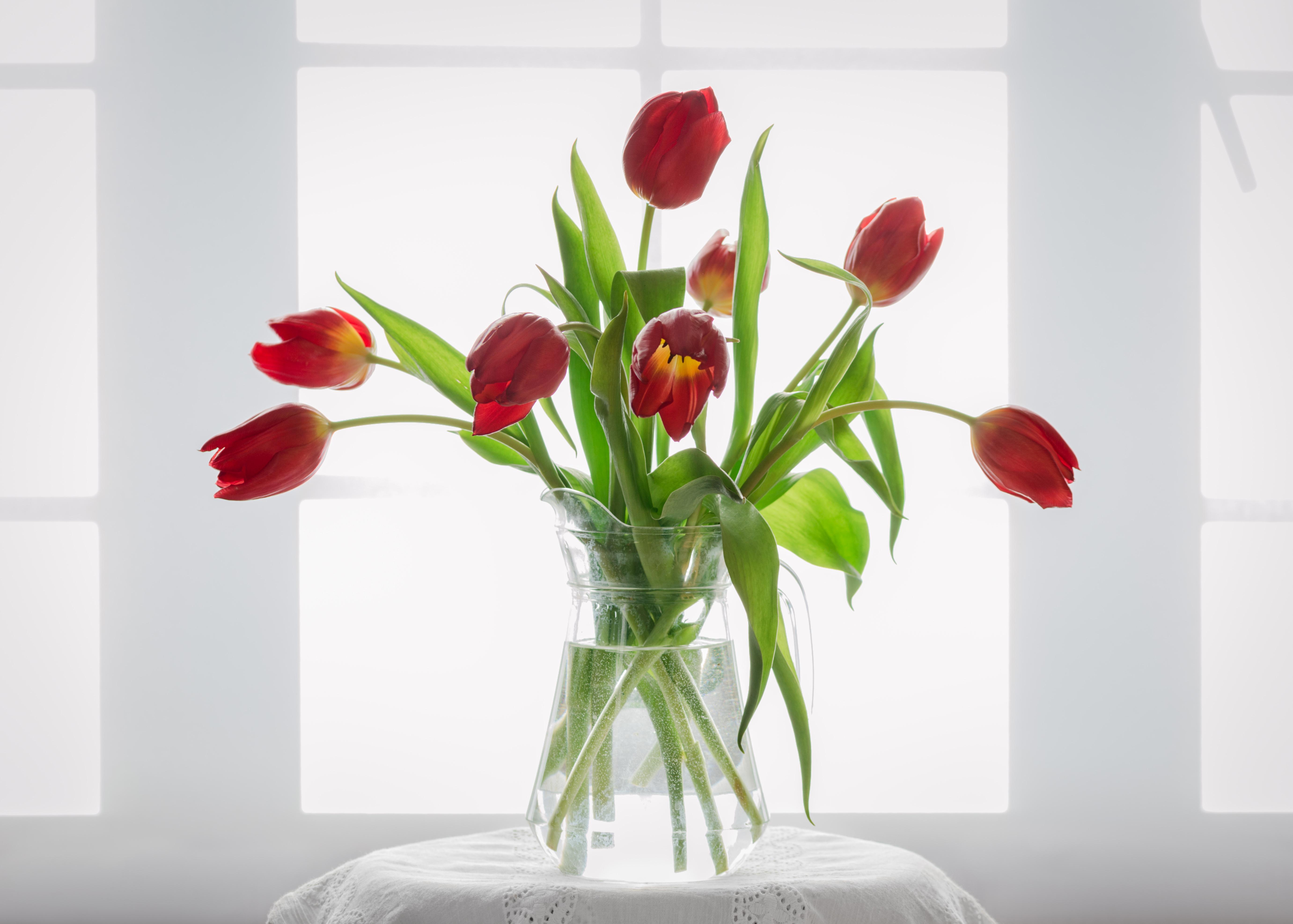 Sfondi bianca finestra rosso tulipani bicchiere pizzo vaso di fiori tulipano highkey - Tagliare vetro finestra ...