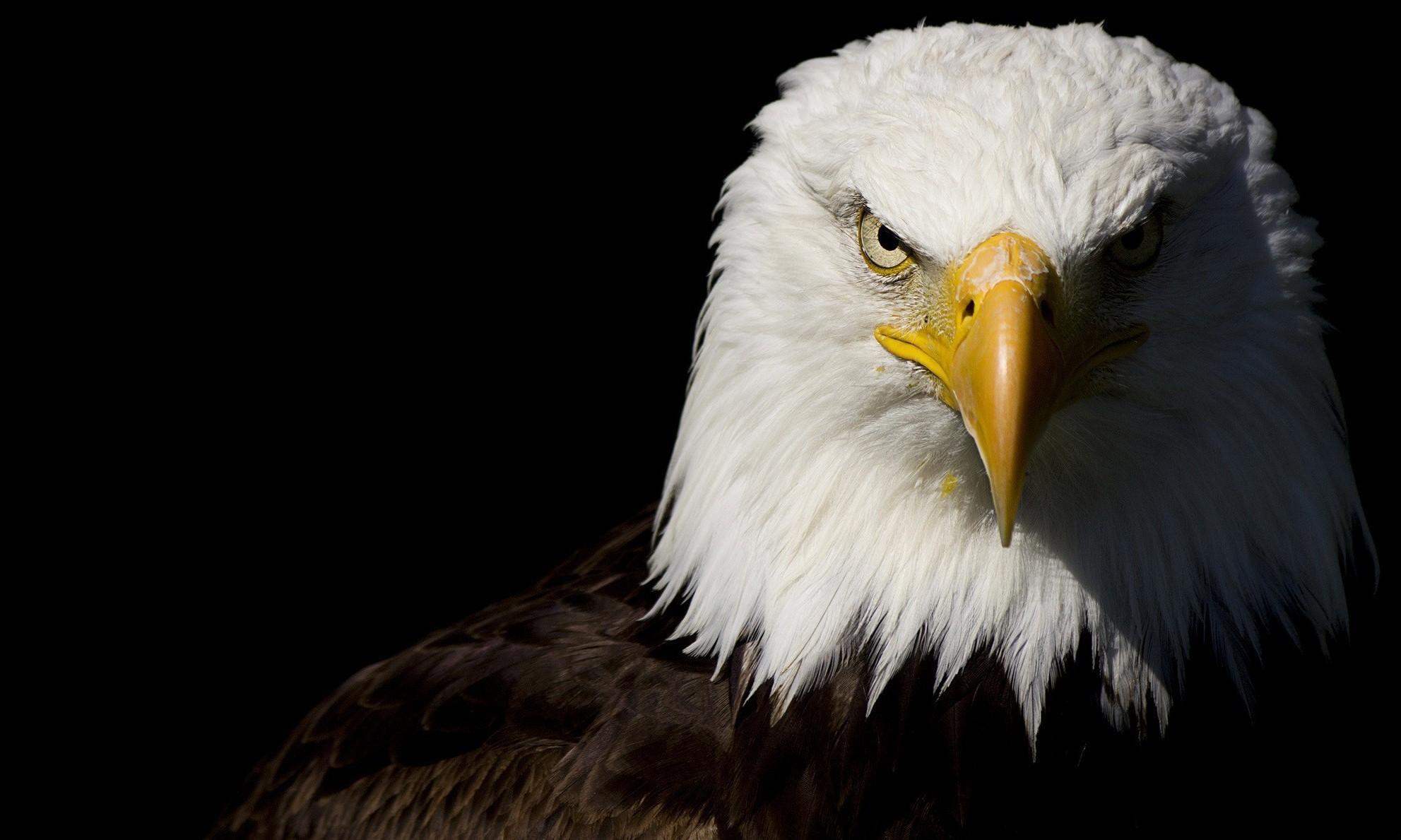 собрал огромную картинки на аву орел подъеме