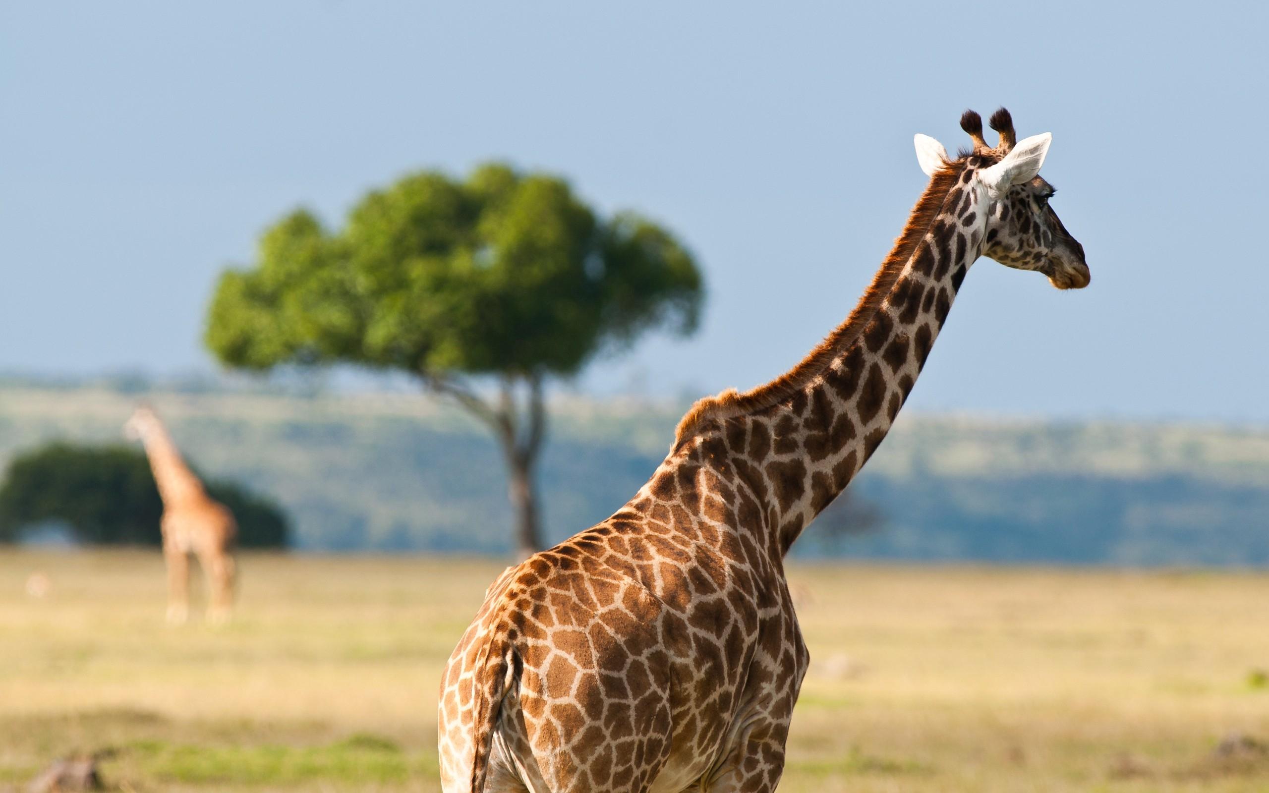 оборот фотки и картинки жирафа назвала этот стиль