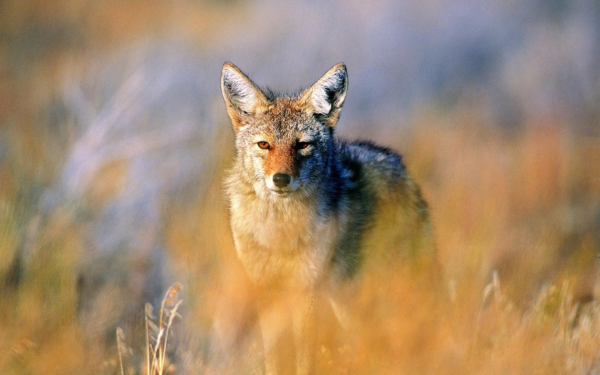 фото картинки хомяки степные волки прошлые разы все
