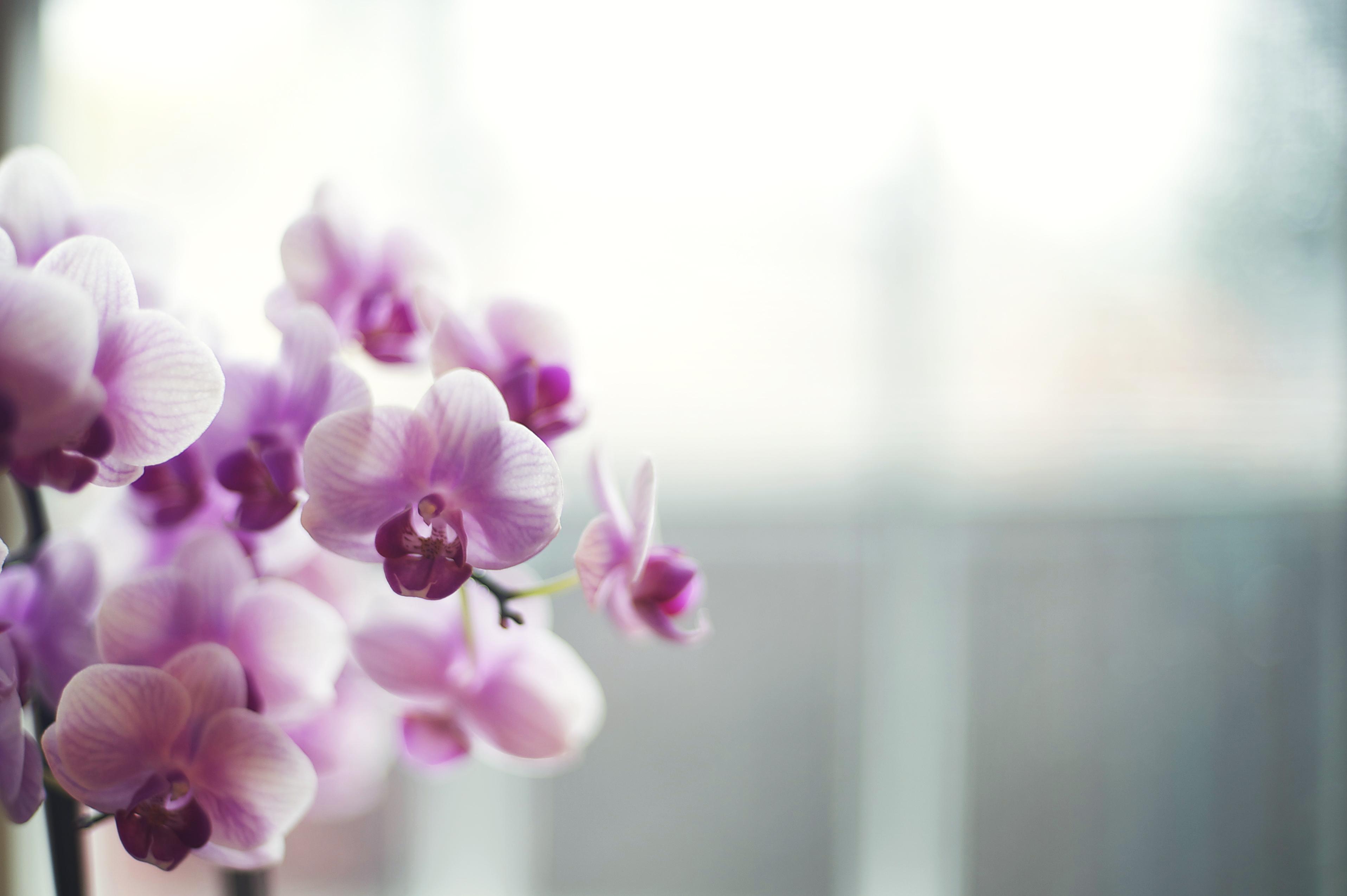 foto de Fond d'écran : fenêtre, Orchidées, violet, branche, fleur, rose ...