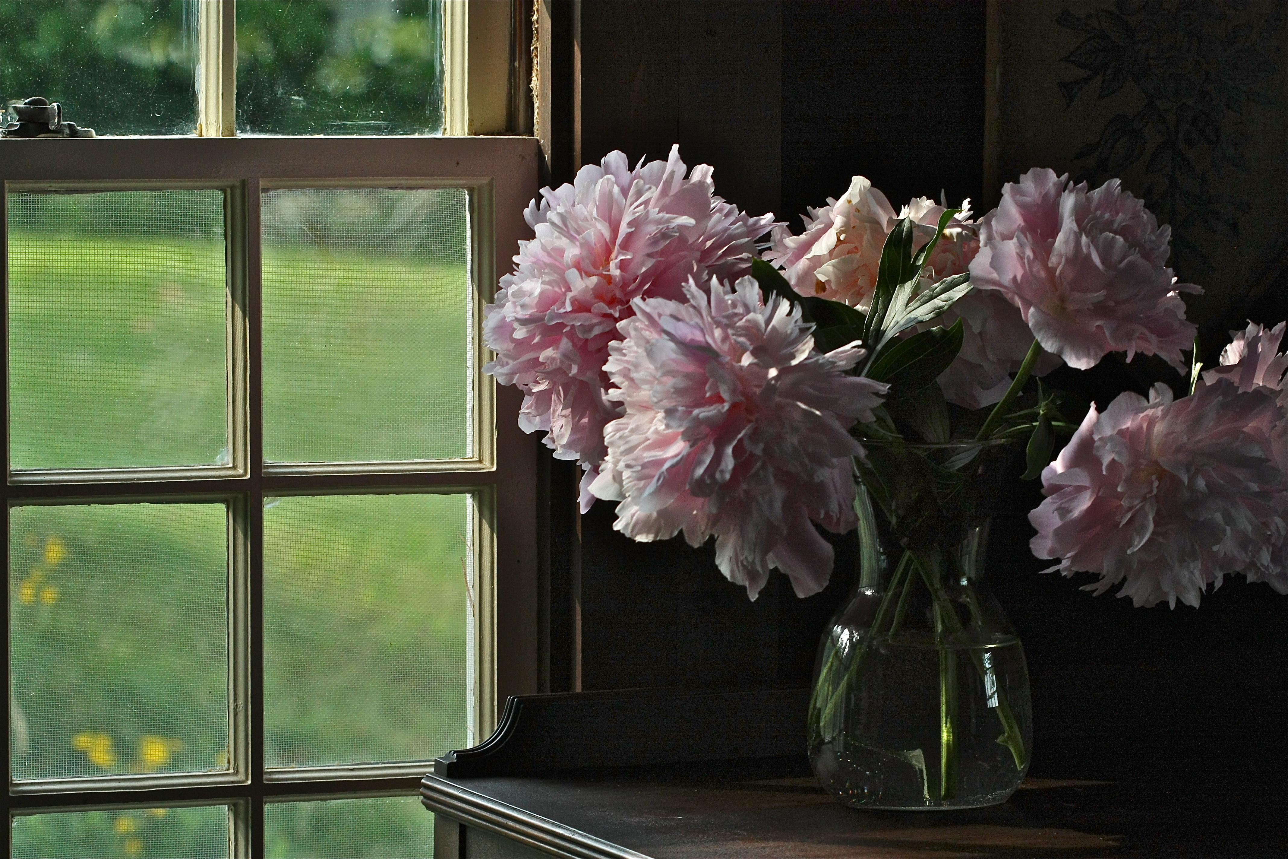 Fond D Ecran Fenetre Interieur Verre Rose Printemps Hortensia