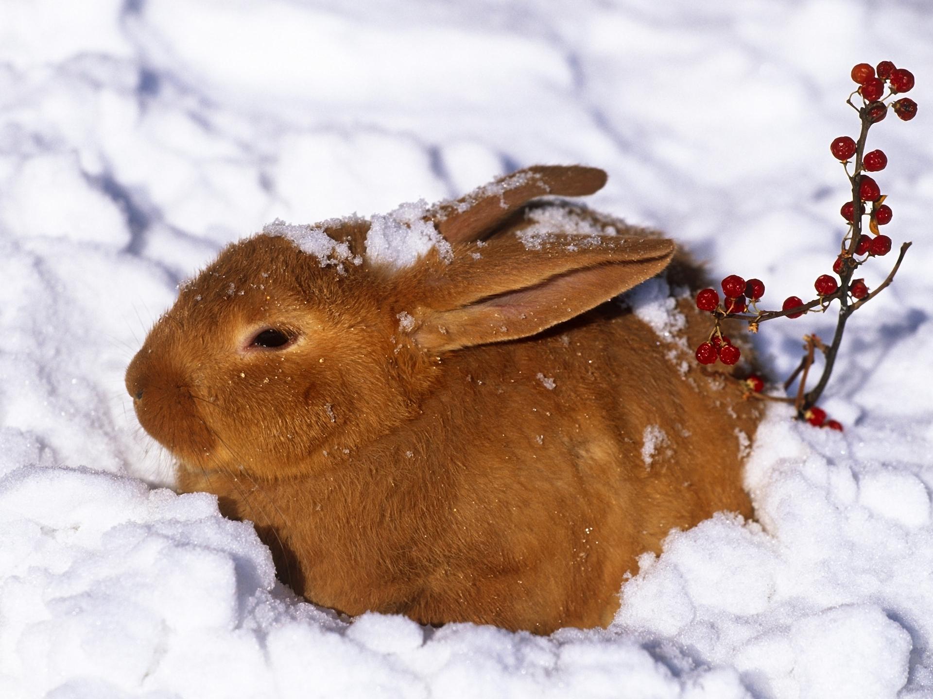 красивые картинки зайца зимой четко, вовремя
