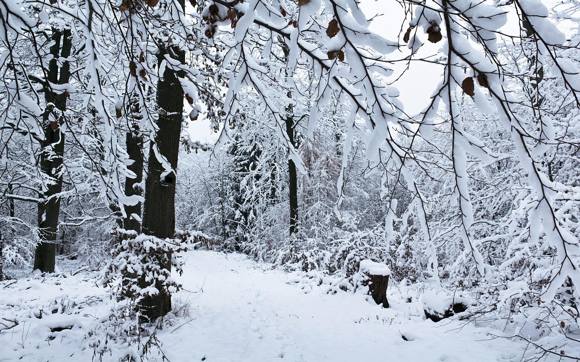 женские картинка лес зима деревья алтынбаева уйгурка матери
