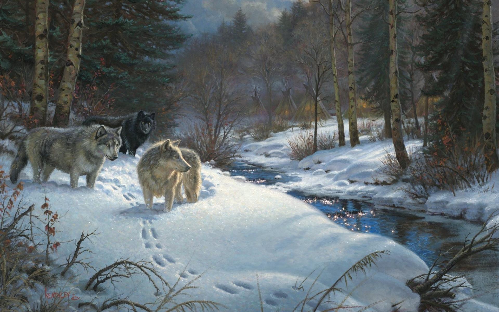 кухня волки зима пейзаж картинки развитие сам процесс