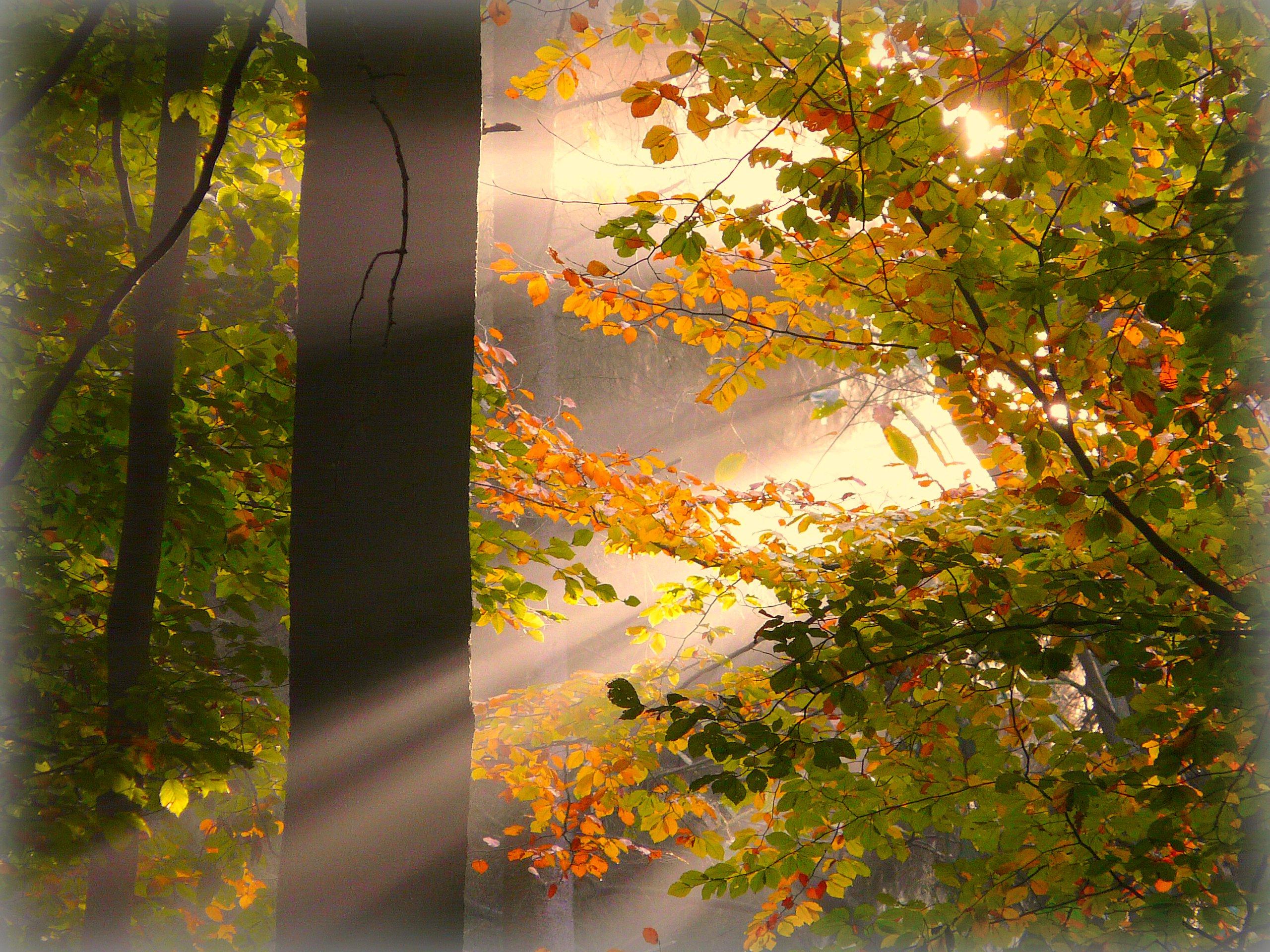 Holz Siegburg hintergrundbilder holz morgen sonne baum kunst fallen natur
