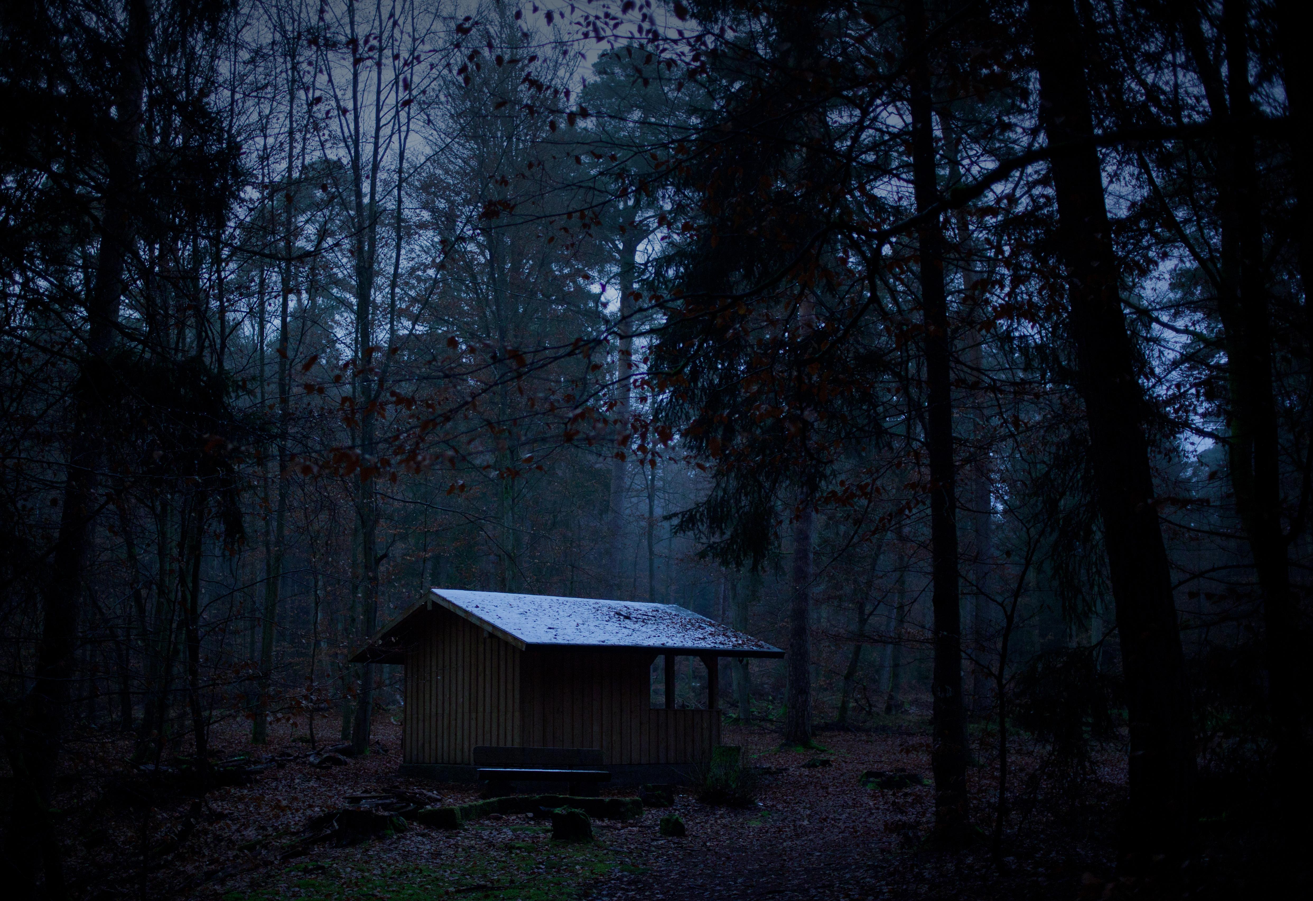 Wallpaper Wood Trees Tree Night Forest 35mm Canon Dark