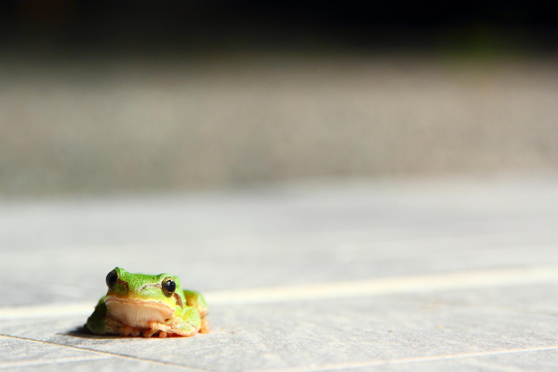 Hintergrundbilder : Welt, Leben, Kamera, Farbe, niedlich, Grün ...