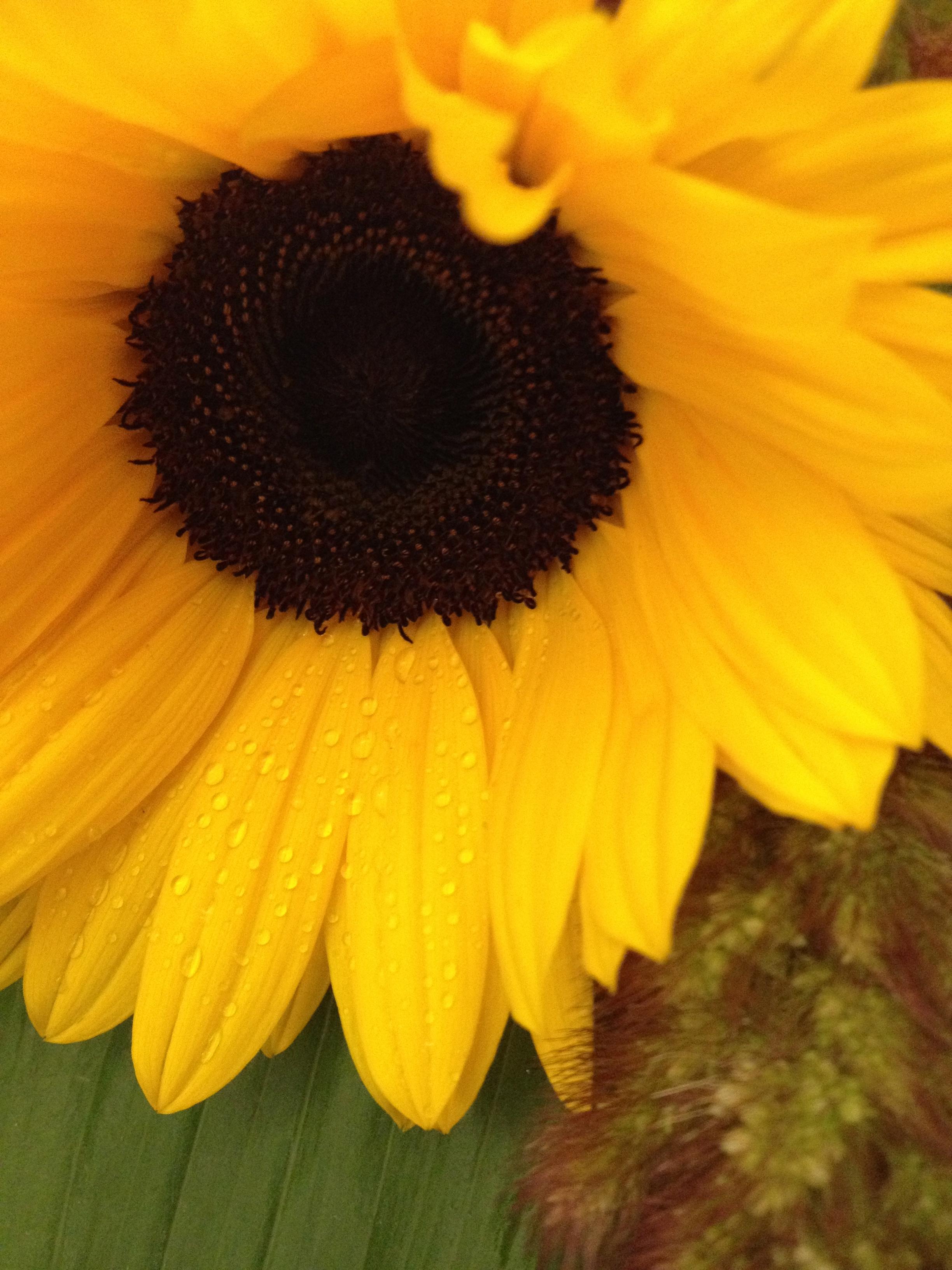 Sfondi Giallo Fiore Flora Petalo Impianto Di Terra Pianta